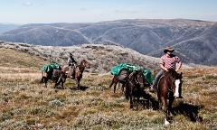 Pioneering the High Plains & Mittagundi Bush Festival Packhorse Adventure (Mt Bogong Section)