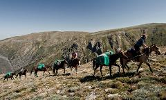 Mount Bogong Pack Horse Adventure