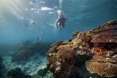 Cairns & The Great Barrier Reef - 4 Days