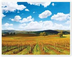 Hahndorf and Barossa Wine Experience