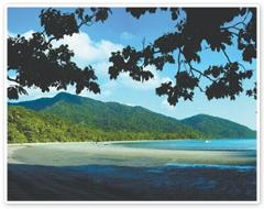 Cape Tribulation &  Daintree Wilderness