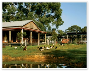 Australian Outback Experience with Sheep Station, Food and Wine