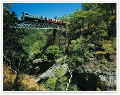 Kuranda - Your Choice