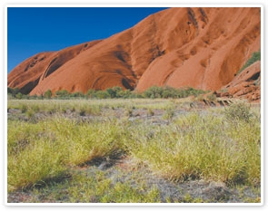 Uluru Sunrise & Guided Cultural Walk