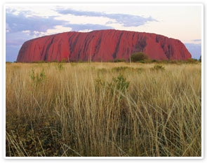 Uluru Sunrise & Field of Light Tour