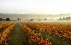 Upper Yarra Valley Experience- 1 Day Tour