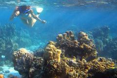 Reef Snorkeling Tour Farito