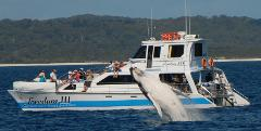 Premium 3/4 day Whale Watch tour