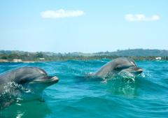 Gift Voucher - Go Sea Kayak Dolphin Tours (Adult)