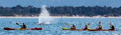 The Byron Bay Sea Kayak Tour