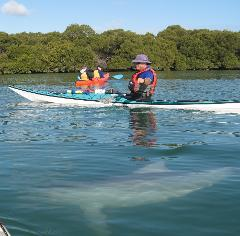 Gift Voucher-Dolphin Sanctuary and Ships Graveyard Kayak Tour