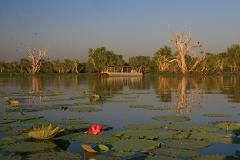 8.45 am - 1 Hour Wetland Cruise (Apr -Oct)