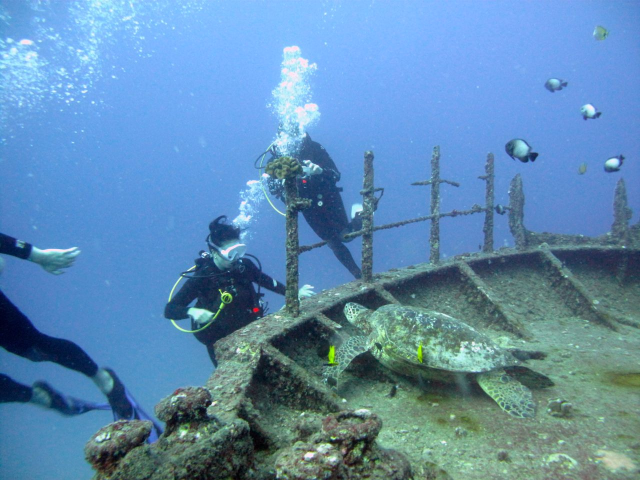 Two Tank Wreck/Reef Boat Dive