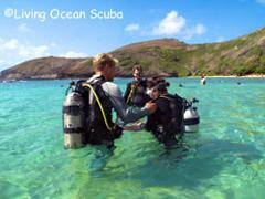 Non-Certified Hanauma Bay Shore Dive