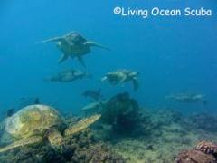 Two Tank Turtle/Reef Boat Dive