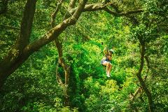 The Orginal Canopy Tour