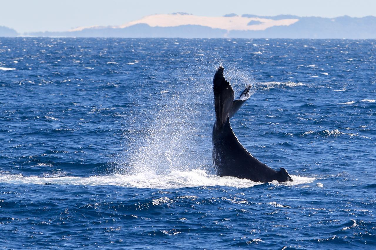 Yalingbila Whale Boat Tours Departing Every Thursday And