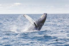 Guided Land Based Whale & Culture Walk