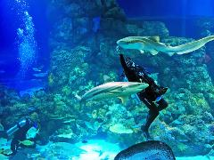Cairns Aquarium | Dive with the Sharks