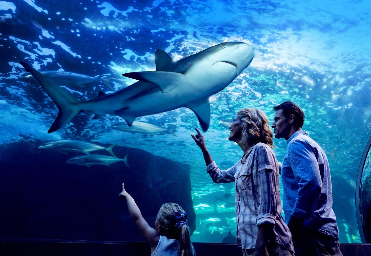 Aquarium by Night with 3 course dinner