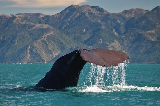 Christchurch TO Kaikoura Express Private Transfer 1 to 5 people incl.