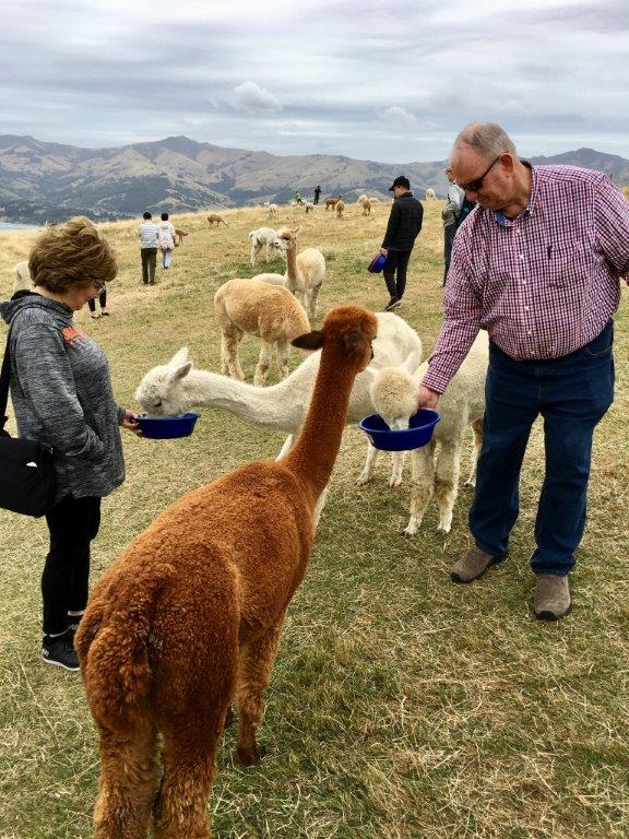 *Lyttelton and the Shamarra Alpaca Farm tour full day private tour with a local - upto 5 people