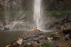 Minyon Waterfall Rainforest Tour