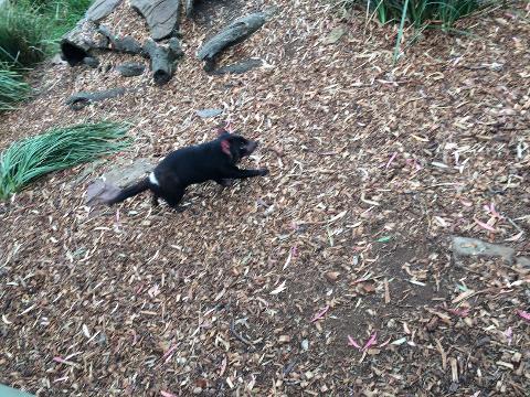 Take a Peek at our Peak, Bridge and Wildlife Tasmania Australia