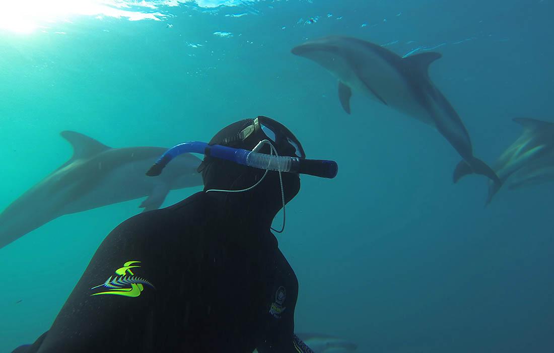 Kaikoura Dolphin Experience