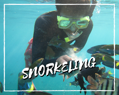 Private Snorkeling at Pulau Payar Marine Park by Sea Hawk