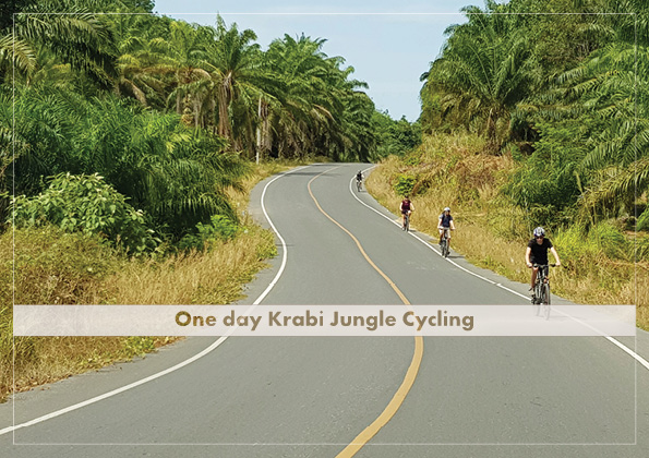 FD Jungle Cycling (include lunch)