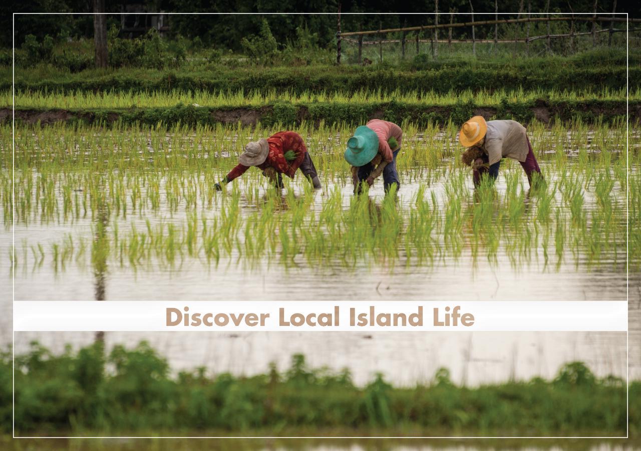 ECO Premium Discover Local  Island Life