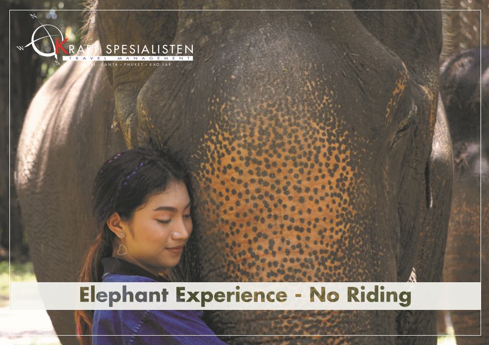 Elephant Experience - Half day program