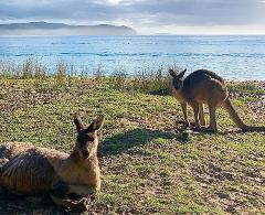Batemans Bay Day Tour from Canberra - Indigenous Experience