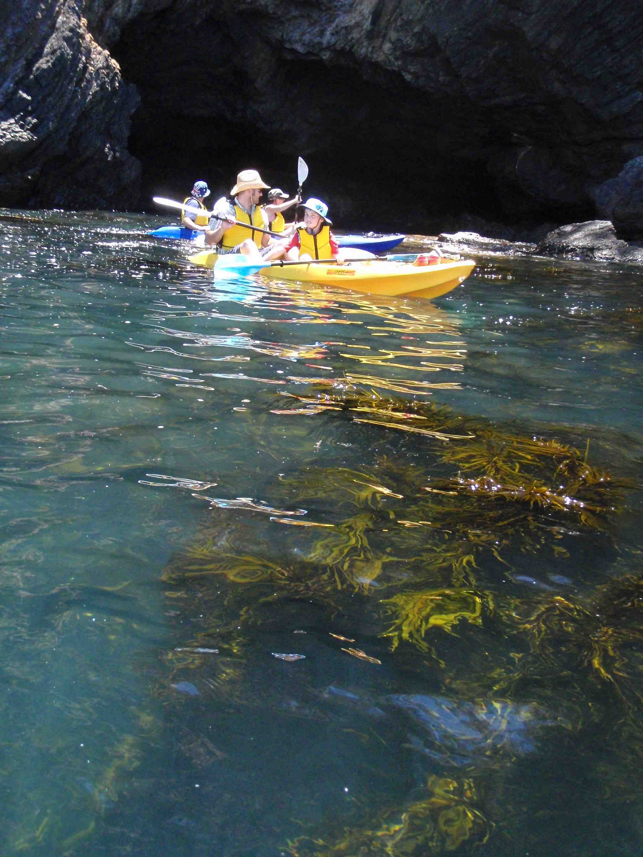 Glass Bottom Kayak Tour