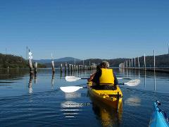 Canberra to Coast Day Tour with Oyster Tasting Kayak Experiences