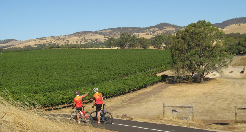 Tour Of The Barossa Cycling