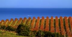 Tour de McLaren Vale - Private