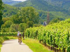 Tour de Alsace Vineyards