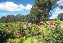 Swan Valley, Wildlife Park, Winery & Fruit Orchard