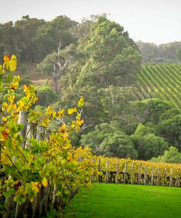 Perth, Fremantle, Swan Valley & Wildlife Park