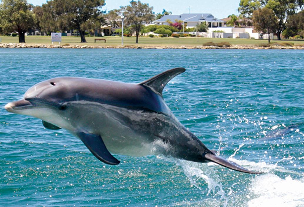 Mandurah Canals & Dolphin Watch Tour