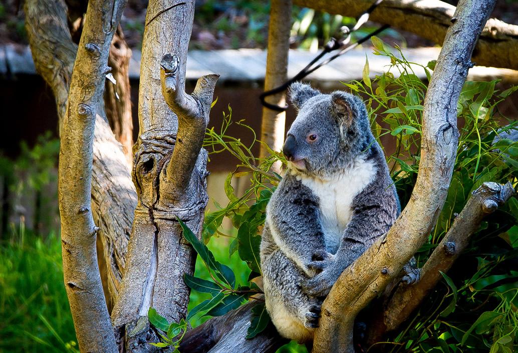 Swan Valley & Wildlife Park Tour