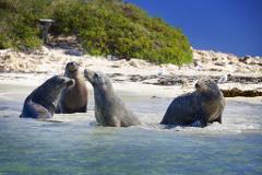 Penguin Island, Sealions & Wildlife Park