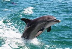 Mandurah Dolphins, Chocolate & Fremantle Tour