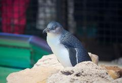 Penguin Island Adventure Tour