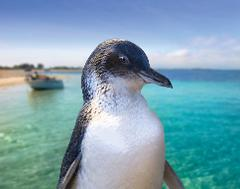 Mandurah Canal Cruise & Caversham Wild Life Park  (optional Lunch)