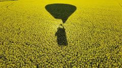 Canola Balloon Flight - meeting in Benalla