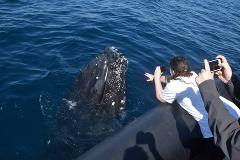 Private Whale Watching Tour - available daily from May until November
