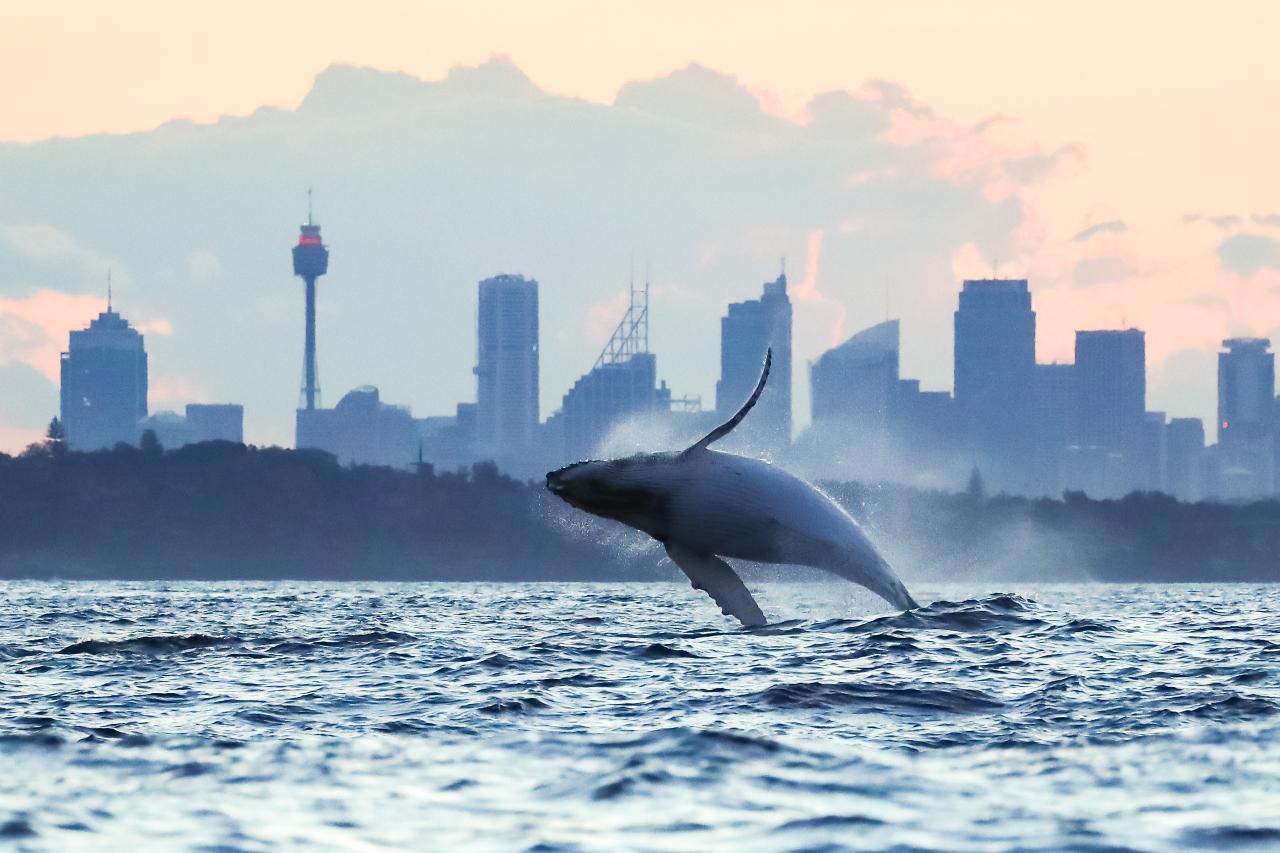 Premium Sunset Whale Watching Safari
